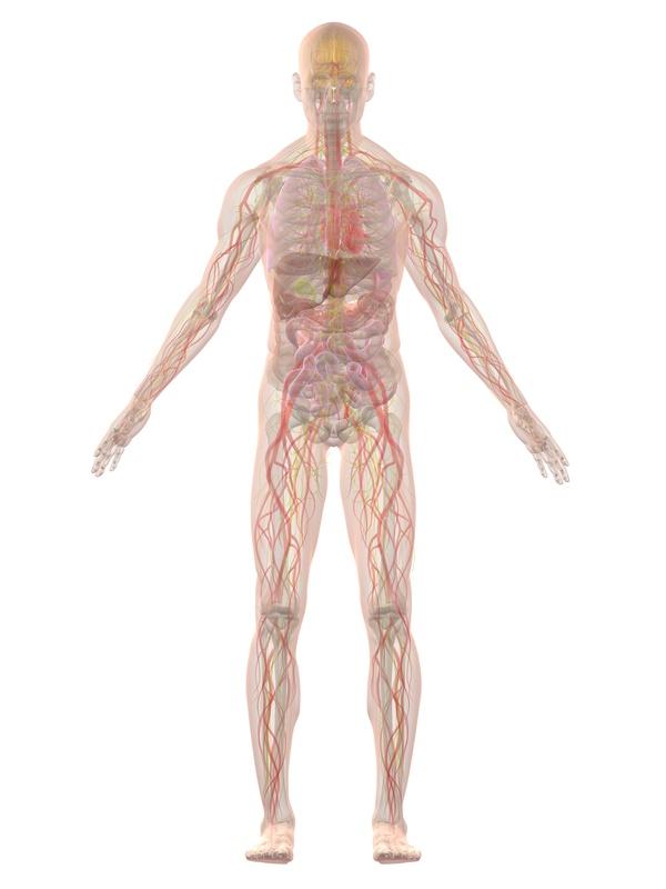 Schmerzen  und Beschwerden des menschlichen Körpers finden