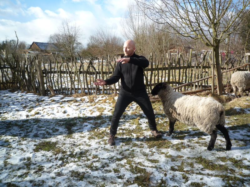 Schaf im Spreewaldcamp, Neustadt