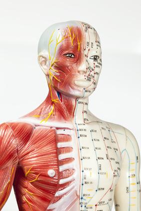 Kiefergelenkstörung (CMD) - Meridiane zeigen die Verbindungen zu Ursachen