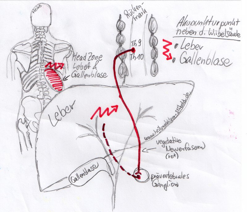 Organstörung oder Stoffwechselstörung als Ursache